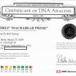 Rbjbtknl's Machabear Prime Certificate Of DNA Analysis