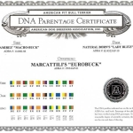 Central Coast Kennel's Eurobuck DNA Parentage Certificate
