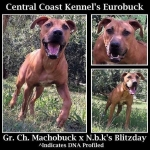 Central Coast Kennel's Eurobuck