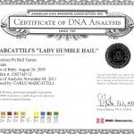 Marcattili's Lady Humble Hail DNA