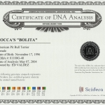 Rocca's Bolita Certificate Of DNA Analysis