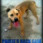 Paulie's Hack Saw