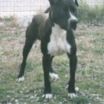 Central Coast Kennel Frisco