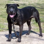 Carolina Game Dogs Jethro Rom