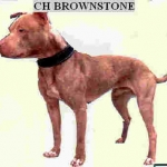 ch-jr-dog's-brownstone-4xw