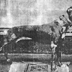 John Mc Donald Grip (Gas House Dog) 1910
