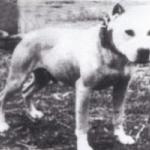 Liyods' Ch Gato Rom