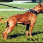 Paulie's Fire