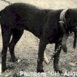 plumbers-ch-alligator-rom