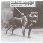 tudors-black-demon