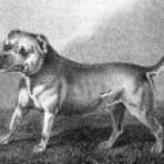 Bull-and-Terrier--3