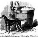 English_Terrier