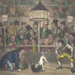 dog-fighting