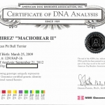 Machobear DNA Certificate Of Analysis