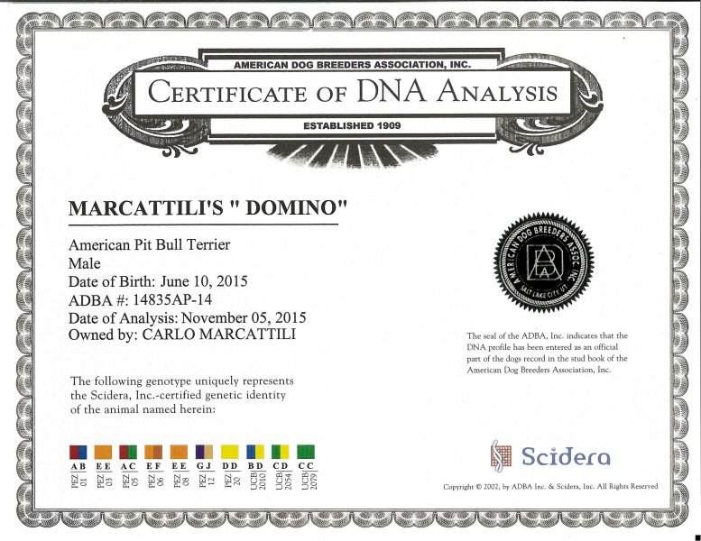 Central Coast Kennel's Domino Certificate DNA Analysis