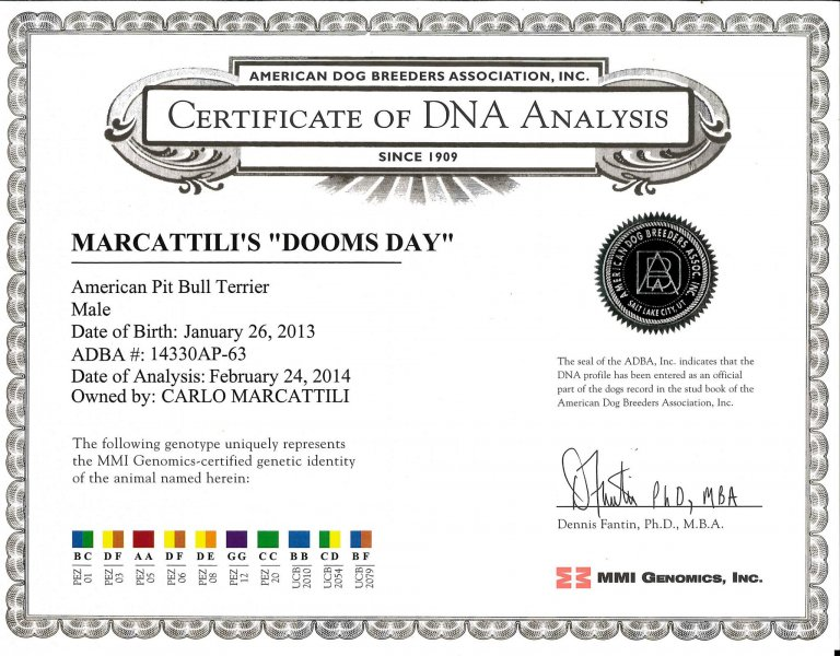 Central Coast Kennel's Doomsday Certificate DNA Analysis