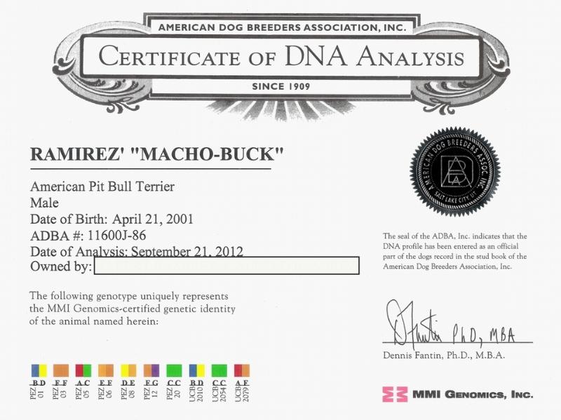 Gr. Ch Machobuck R.O.M Certificate Of DNA Analysis