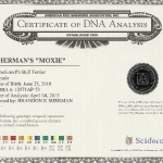Sherman's Moxie Certificate DNA Analysis
