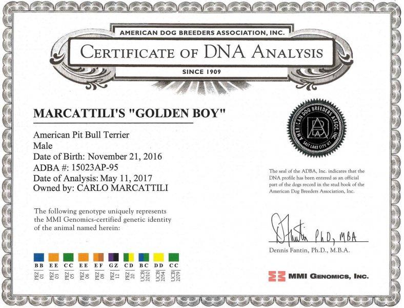 Golden Boy Certificate DNA Analysis