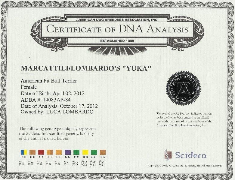 Yuka Certificate DNA Analysis