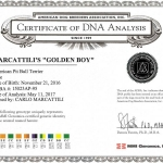 Golden Boy Certificate DNA Analysis