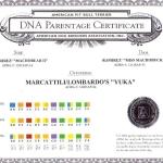 Yuka DNA Parentage Certificate