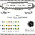 Golden Boy DNA Parentage Certificate