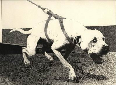 History Of Ch Crenshaw's Jeep (4XW) R O M | Central Coast Kennel