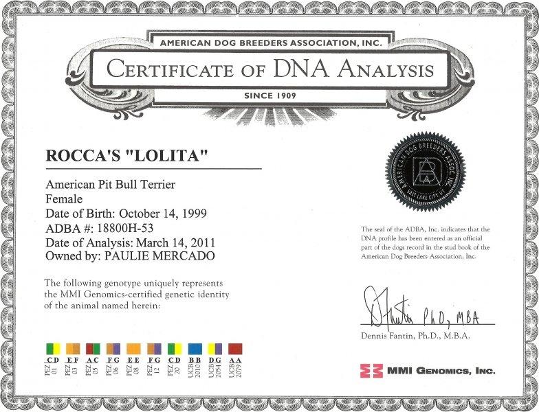 Rocca's Lolita Certificate Of DNA Analysis