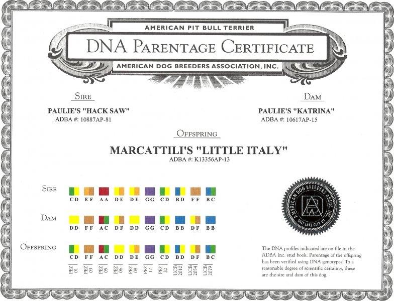 Marcattili's Little Italy DNA Parentage Certificate
