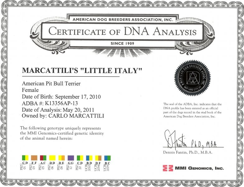 Marcattili's Little Italy Certificate Of DNA Analysis