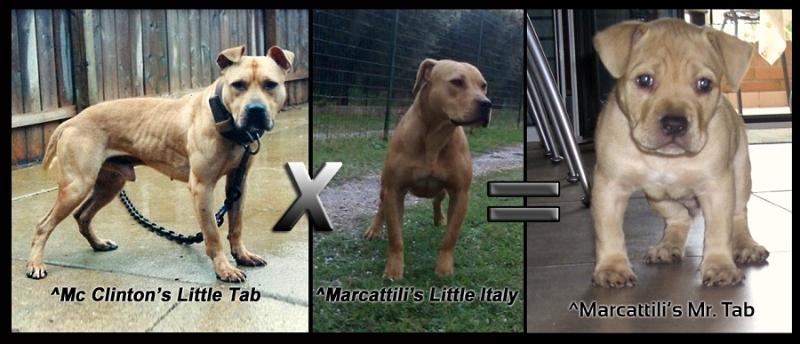 Little Tab x Little Italy= Mr. Tab