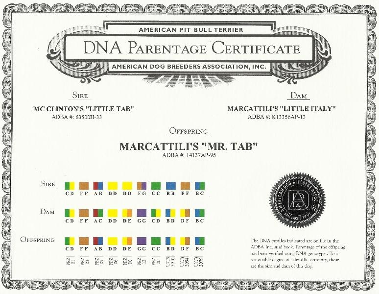 Marcattili's Mr. Tab DNA Parentage