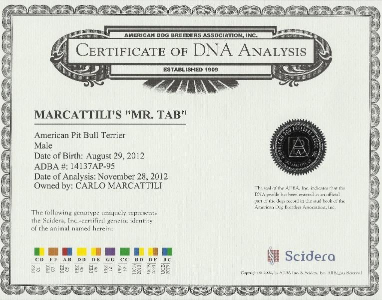 Marcattili's Mr. Tab DNA Certificate