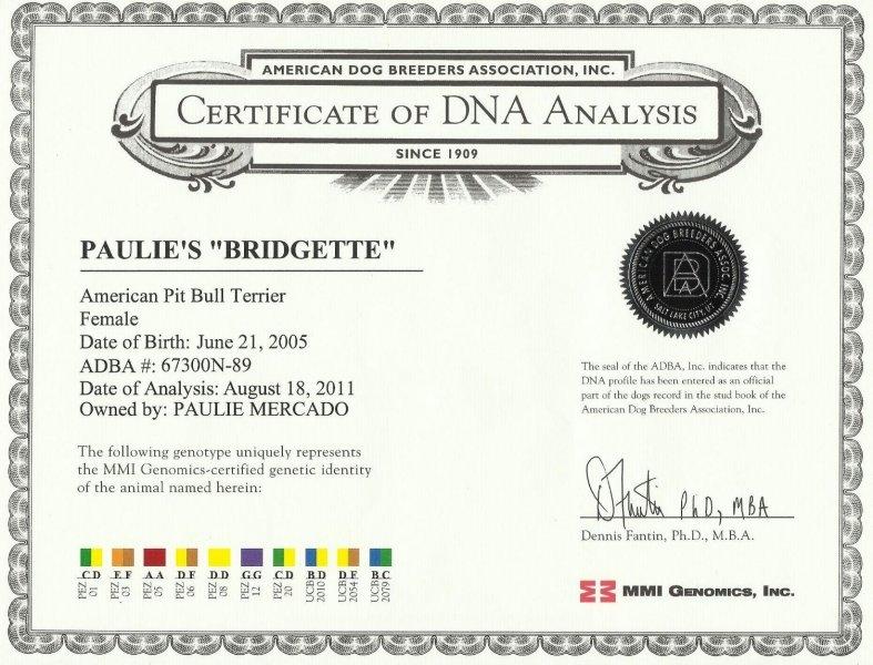 Paulie's Bridgette Certificate Of DNA Analysis