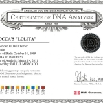 Rocca's Lolita Certificate Of DNA Analysis