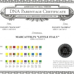 Marcattili's Little Italy DNA Parentage Certificate