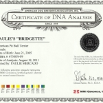 Paulie's Bridgette Certificate Of DNA Analysis