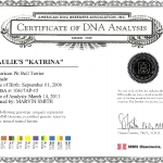 Paulie's Katrina Certificate Of DNA Analysis