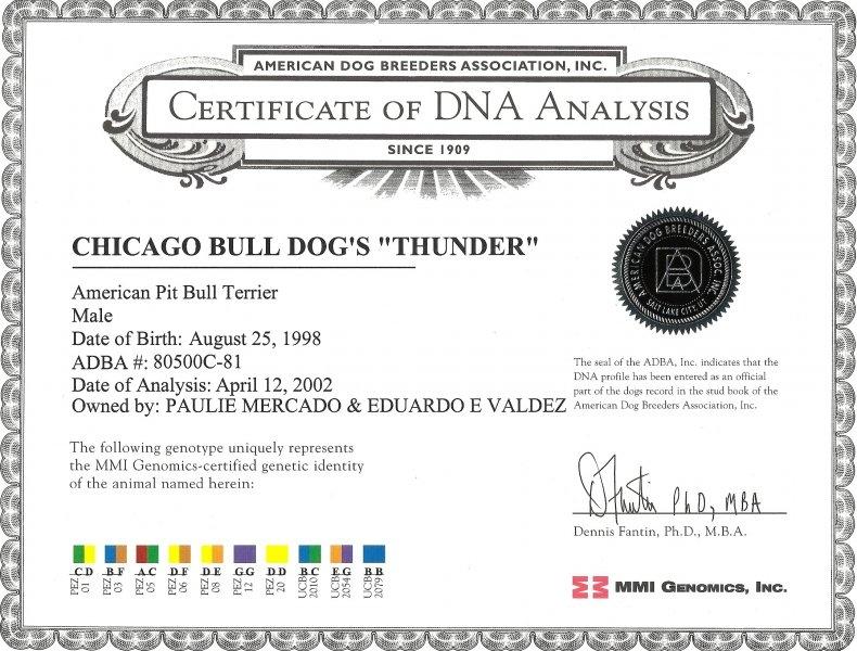Chicago BullDod's Thunder Certificate Of DNA Analysis
