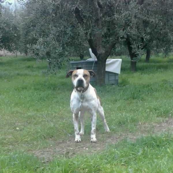 Central Coast Kennel Alì