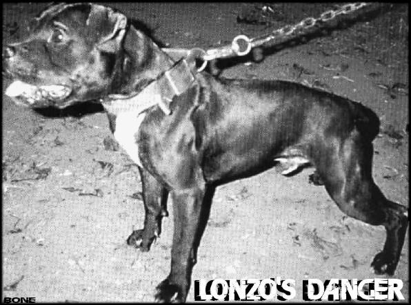 LONZO\'S DANGER
