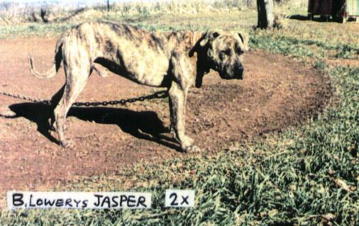Lowery Jasper Rom