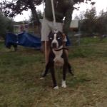 Central Coast Kennel Yelena