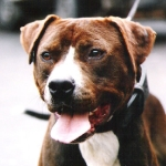 Central Coast Kennel Ceasar