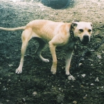 Central Coast Kennel Cheyanne