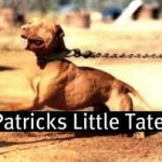 Patrick's Little Tater