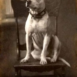 pilot-white-pit-ch-chair-1904-2w