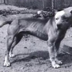 sorrells-bull-rom