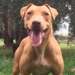 Central Coast Kennel's Red Babydoll